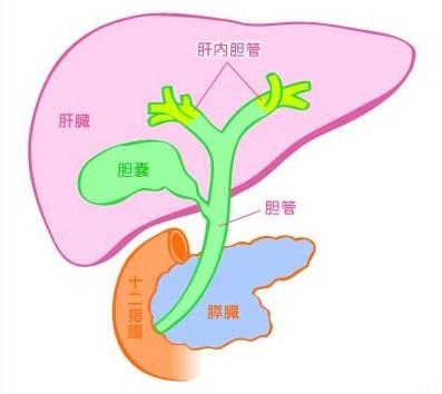 川島なお美激やせ背中画像で余命が判明!腹水と黄疸の末期とは