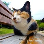 【猫がキュウリを大嫌いな理由】なぜ驚くのか?動画から徹底検証!